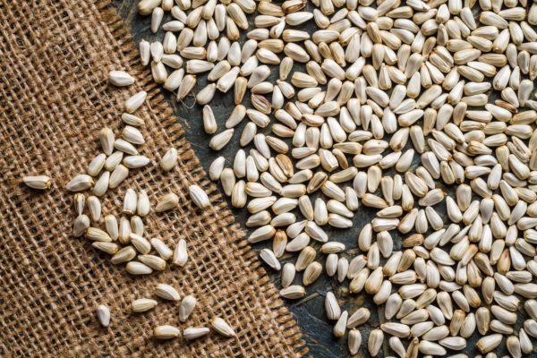 semillas de cártamo